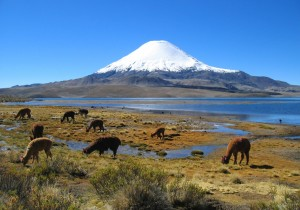 volcanoes-chile