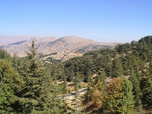 al-shouf-cedar-nature-reserve