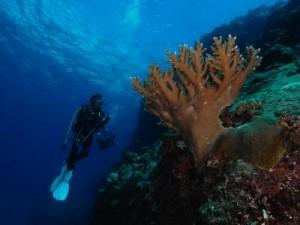 grand-bay-mauritius