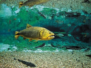 snorkeling-in-rio-bonito